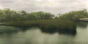 Bulow Creek Salt Marsh
