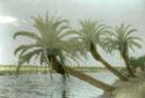 Florida Fantasy 4