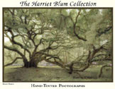 The Harriet Blum Collection Book