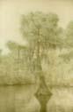 Cypress, Cane Bayou