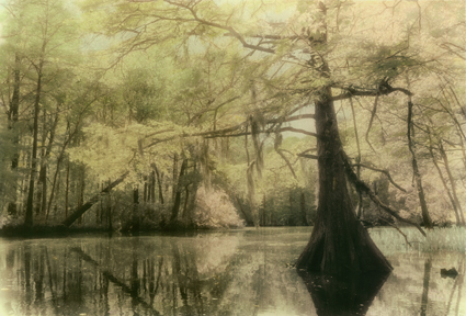 Bayou Fantasy by Harriet Blum