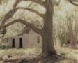 Oak and Crepe Myrtles
