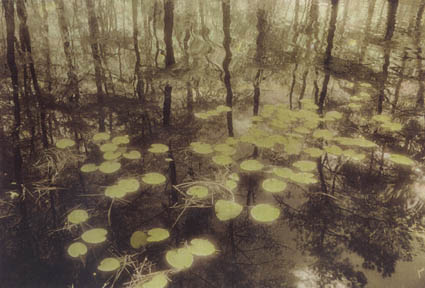 Reflection with Lily Pads by Harriet Blum